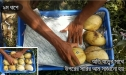 Photo Of Rajshahi Mango, VIP Smart Packeging, Chapai Nawabganj Mango Pack , Rajshahir Aam, Formalin Chemical Free Fozli (09)